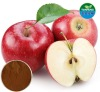 Pure Natural Apple Extract /Polyphenols