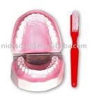 teaching Model Tooth Hygiene Set realia