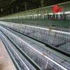 3 or 4 Layer Hot Dipped Galvanized Chicken Cage