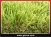 graden grass(SGS)