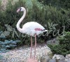 Plastic Flamingo, plastic bird(Garden Decoration)