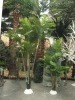 Artificial Heart areca palm tree
