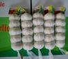 China White Garlic -- Shandong Province