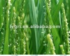 98%TC insecticide brodifacoum