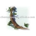 Pueraria Root E.P.