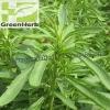 (GMP) Stevia leaf p.e. / Natural sweetener