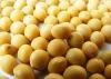 beans from Xinjiang China