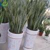 foliage plants for sale