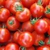 36/38% tomato paste