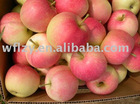 new crop fresh gala apple
