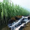 Greenbar water retaining gel--supply plants with water