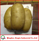 "JQ ""China Fresh Potato"" Fresh Potato Price / 2012 Good quality fresh holland potato"