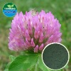 Red Clover Extract in various specification Flavone