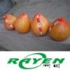 Fresh Shatian Pomelo