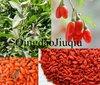 organic wolfberry fruit/goji berry