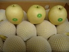 fresh Ya pear all size