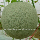 fresh nutmeg melon