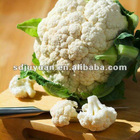 supply new crop IQF frozen cauliflower with top quality