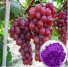 100% Natural Organic grape powder