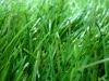 plastic artificial grass