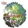 horticultural pvc label printing
