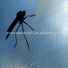 insect window screen / fly screen