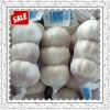 chinese garlic price for 1 ton