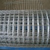 Galvanised welded wire mesh netting