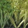 40mm Durable Football grass SJADS40--SKYJADE