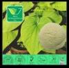 Kava Plant Extract Kawain