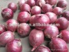 demand of egyptian red onion specification