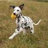 Colorful pet ball for dogs cats