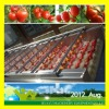 cherry tomato washing and grading machine