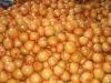 Honey Pomelo(2009 new crop)