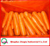 "JQ ""Carrot Price"" 2012 Fresh Carrot Supplier & Factory in Shandong"