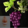 grape fruit seed extract