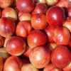 fresh red plum