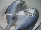 frozen fish whole pomfret butter fish 190-240g