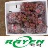 Fresh globe Grape