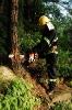 Chain Saw 52cc