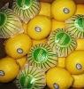 Fresh lemon From Anyue