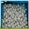 High Quality Frozen white mushroom