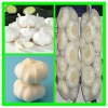 Supply 2012 new crop fresh garlic 5.0 cm in 10 kg carton with best price