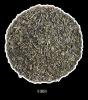 Chunmee green Tea 9366