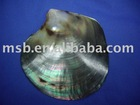 polished black mother pearl shell