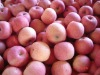 High quality china fuji apples
