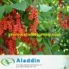 Schizandrol A 3% 98%, Schisandra Berries P.E.