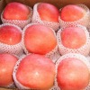 new fresh chinese red fuji apple