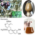 Olive Leaf Extract 6%-60% Oleuropein for Beverage and Nutritional Supplements