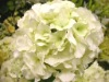 plastic flower hydrangea craft flower
